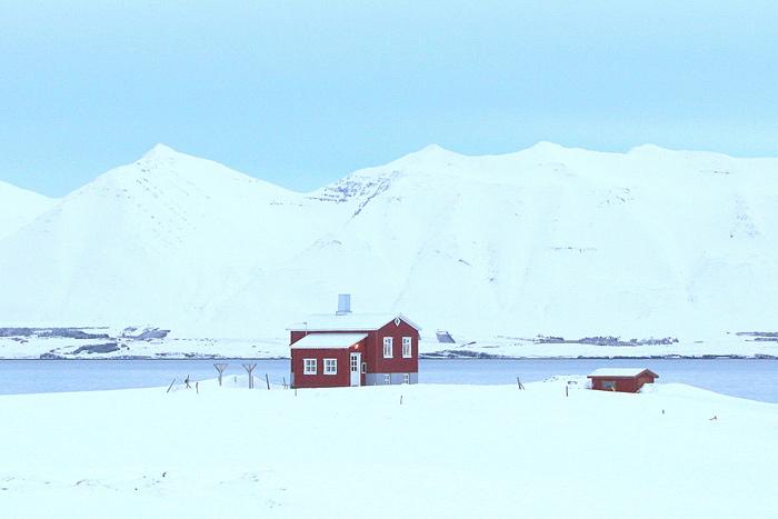 シロクマは北極圏に生息しています。
